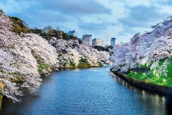 Tóquio - Japão - Os melhores destinos para a sua próxima viagem.