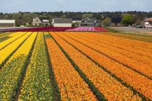 Bollenstreek - Holanda - Amantes de Flores - Destinos