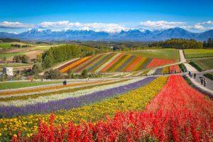 Jardim de shikisai-no-oka - Japão - Amantes de Flores - Destinos