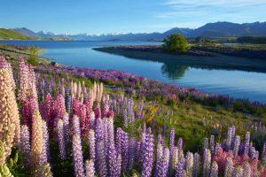 Lago Tekapo - Nova Zelândia