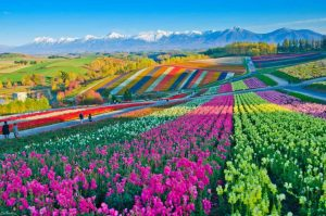 Paisagem florida espetacular