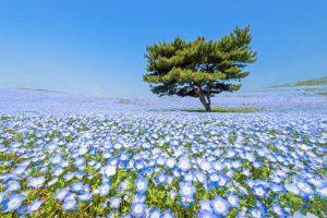 Parque Hitachi Seaside - Japão