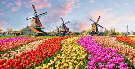 Países Baixos - Moinhos e Tulipas
